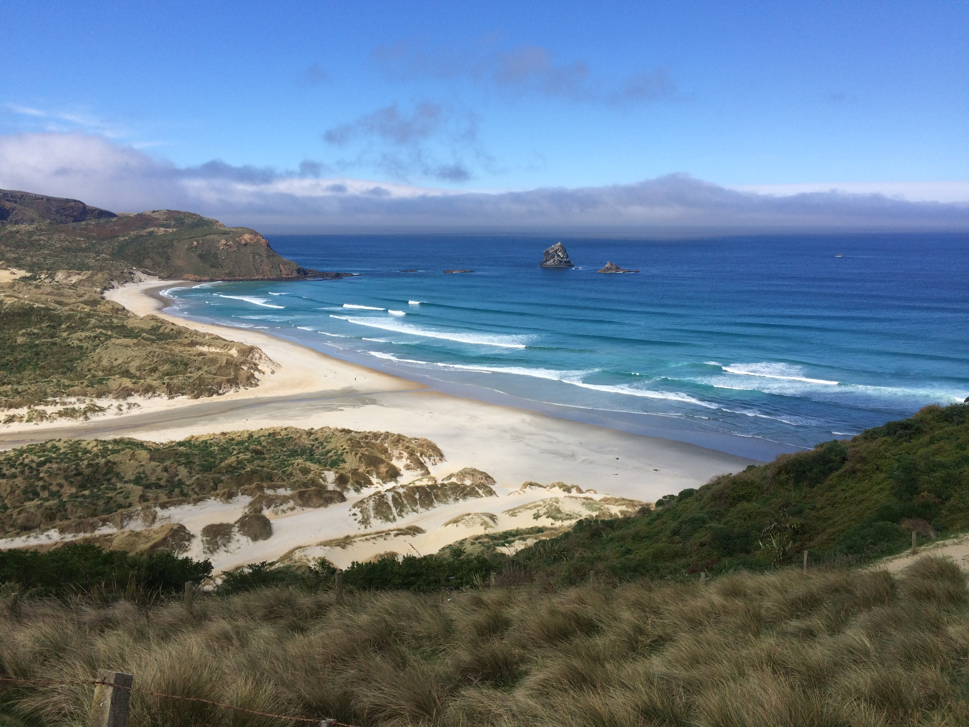 Sandfly Bay, hiking in NZ, where to hike in NZ, one day in Dunedin, what to do in Dunedin, what to do in New Zealand, New Zealand
