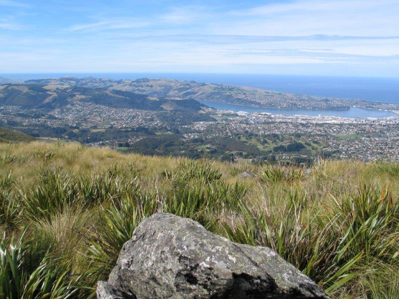 view of Dunedin, NZ from the Flagstaff-Pineapple Track